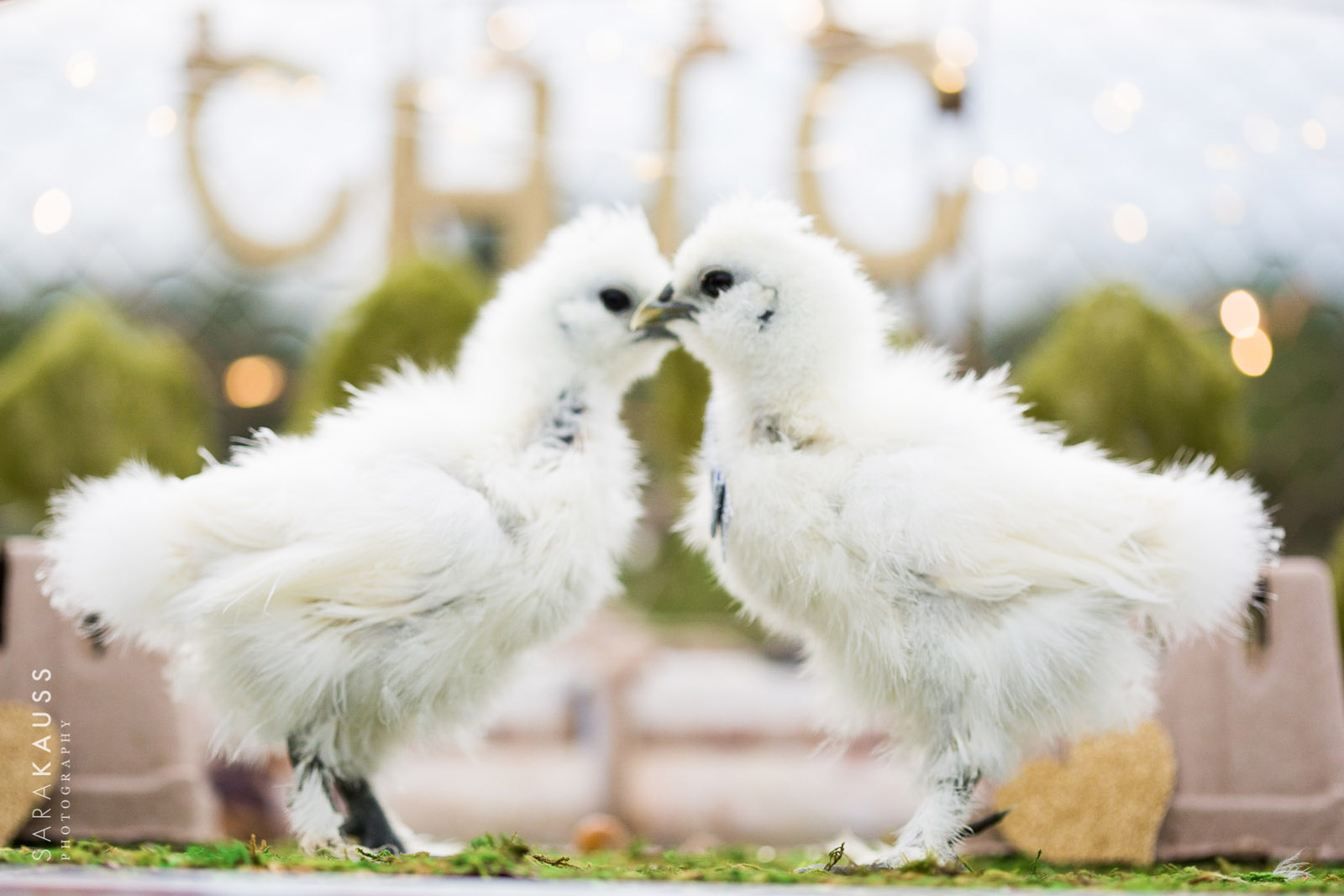 Shabby Chick Wedding | Sara Kauss Photography | Cute Animals