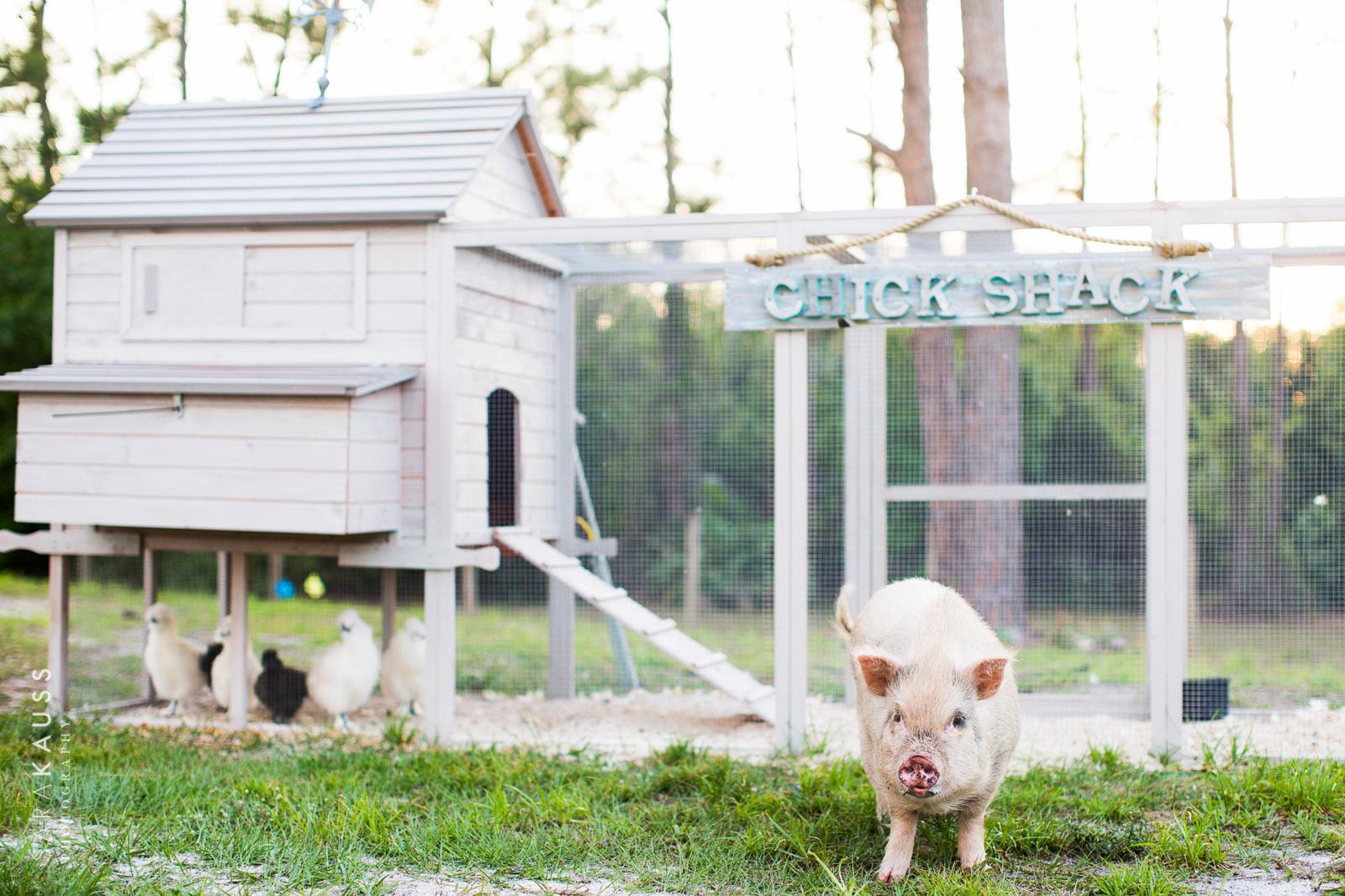 chicken-wedding-by-sara-kauss-photography-5276