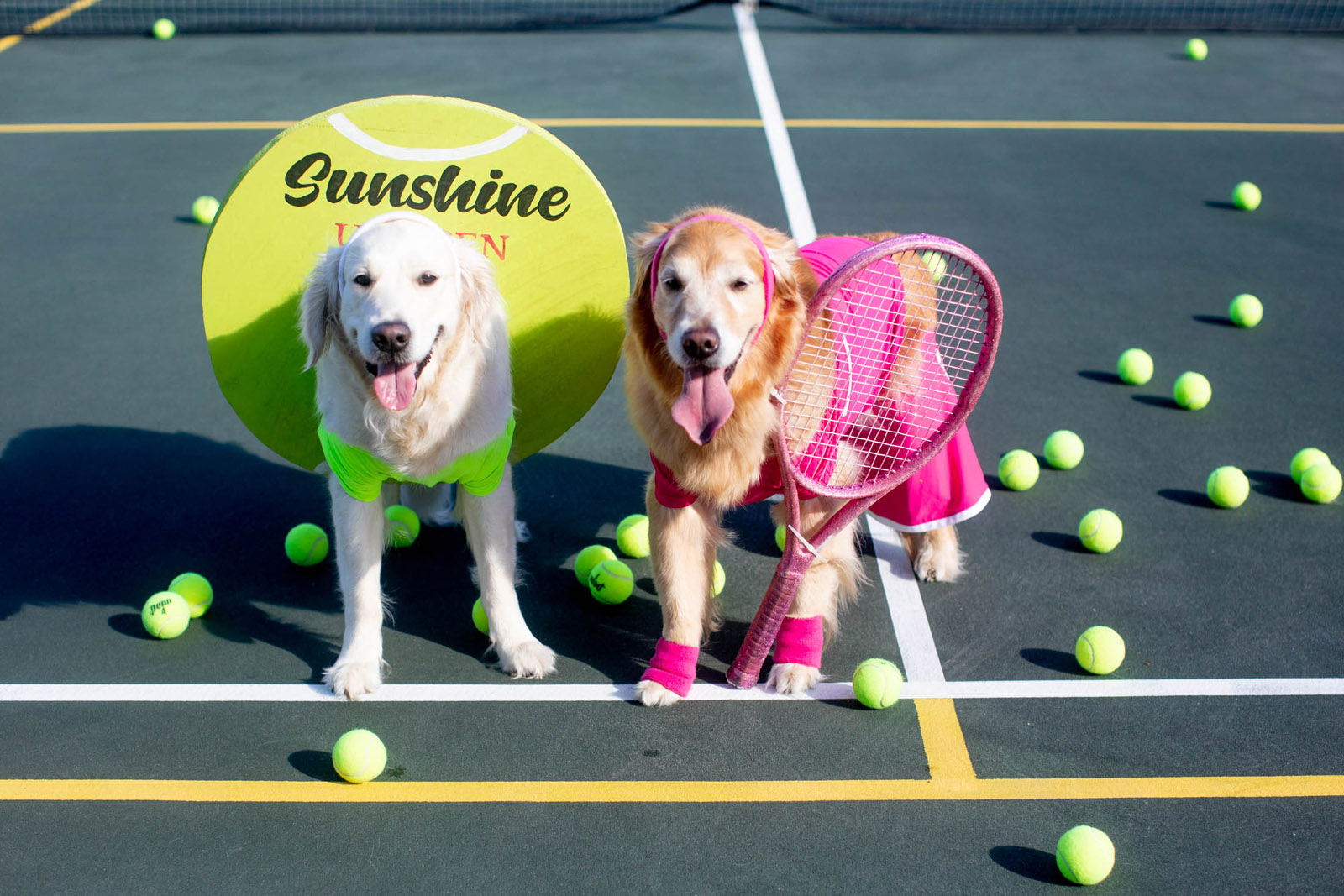 Best Dog Halloween Costume Sunshine The Golden Retriever