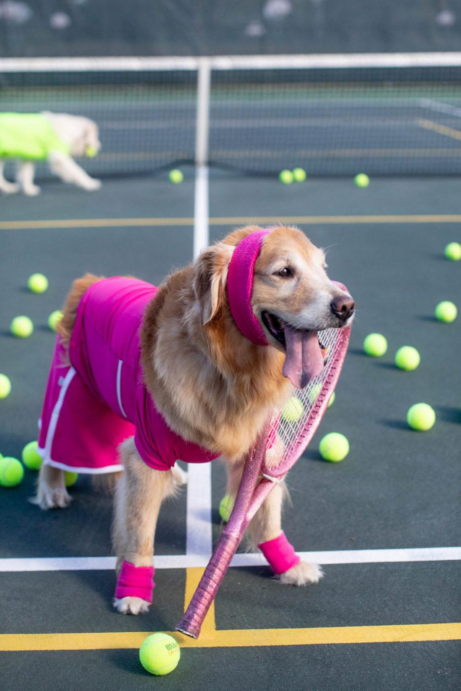 Best Dog Halloween Costume Sunshine The Golden Retriever